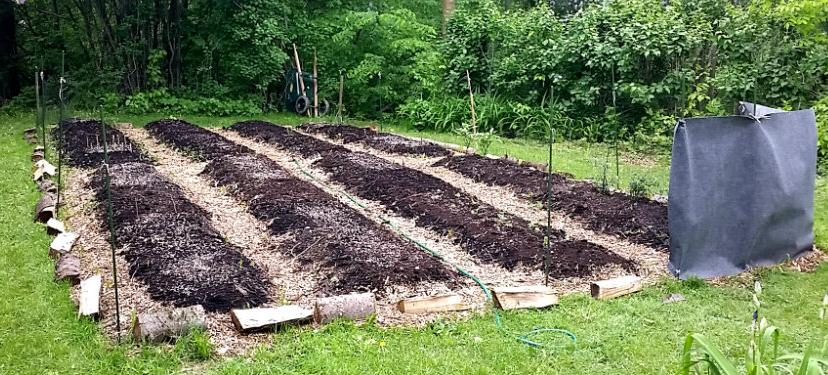 Planifier le potager potager biologique for Planche potager
